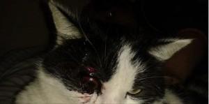 Katze-Auge-Wo