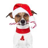 14703949-christmas-dog-as-santa