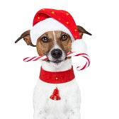 14703949-christmas-dog-as-santa