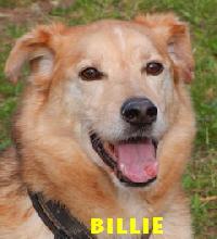 Billie1PT