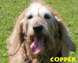 Copper--1-07072013