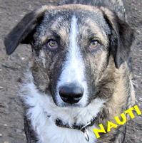 Nauti1