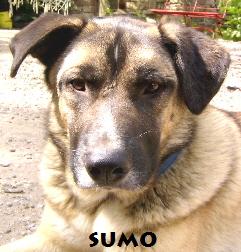 Sumo16