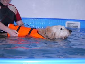 Copper Schwimmen2