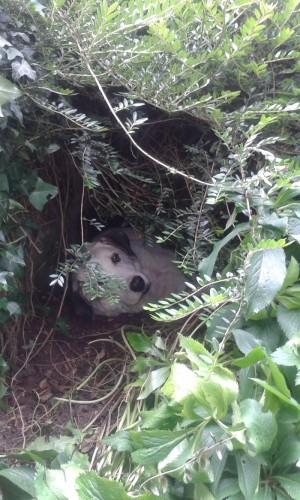 Ivy Urlaub Höhle