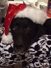 Lou Weihnachten 2015