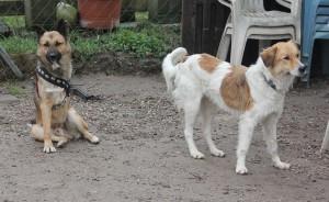 Foxy und Charly
