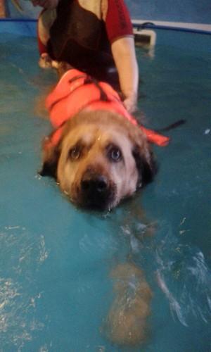 Ayla schwimmen2