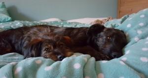 Beanie+Fido im Bett 01.04.16