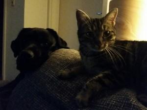 Duffy + Katze